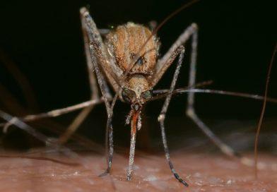 Mieszkańcy czekają na opryski przeciwko komarom