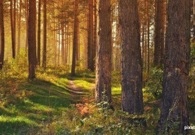 Nadleśniczy Stefan Traczyk: nadrzędnym celem, który przyświeca leśnikom, jest praca nad zachowaniem ciągłości trwania lasu